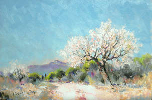 ALMOND TREE IN THE LANGUEDOC